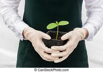 woman in greenhouse