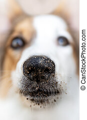 Portrait of a young spotted dog with dirty nose with soil