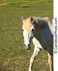 portrait of a young white horse in a meadow
