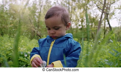 Portrait of adorable baby boy playing with dandelion on green forest background. Cute kid in blue raincoat explores plants, nature. Family, love, child concept.