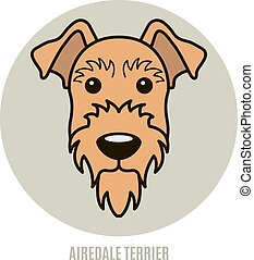 Portrait of Airedale Terrier