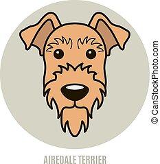 Portrait of Airedale Terrier