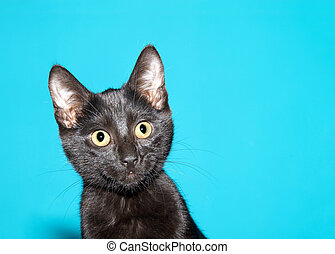 Portrait of an adorable black kitten on blue background
