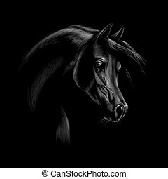 Portrait of an Arabian horse head on a black background....