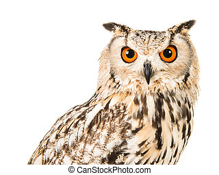 Portrait of an eagle owl on a white background
