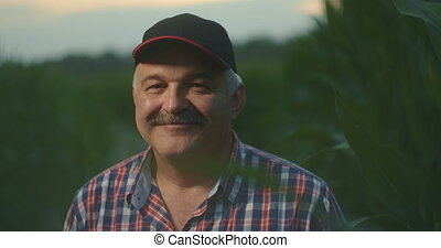 Portrait of an elderly farmer looking into the camera in a cap on a cornfield in slow motion