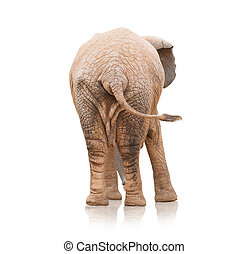Portrait Of An Elephant On White Background