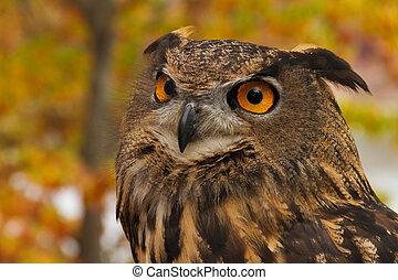 Portrait of an European Eagle Owl
