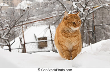 Portrait of an orange cat in the snow