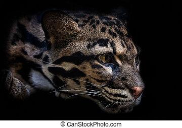 Portrait of beautiful Clouded Leopard