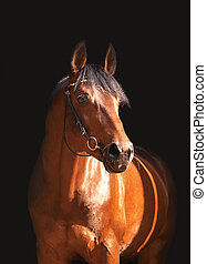 portrait of beautiful horse on dark background outdoor sunny day