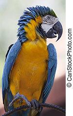 Portrait of beautiful macaw.