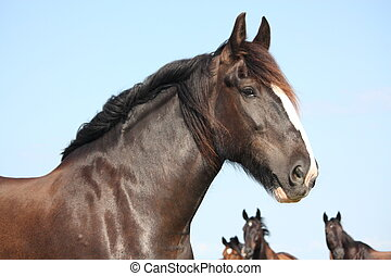 Portrait of beautiful shire horse on sky background - ...
