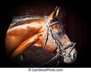 portrait of beautiful sportive horse at the dark background
