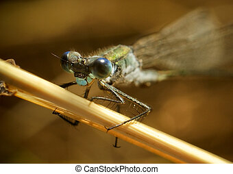 Portrait of big Dragonfly on a branch
