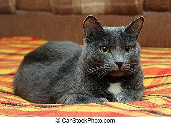 portrait of big gray cat