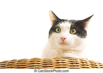 Portrait of black and white cat on sofa