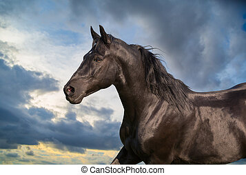 Portrait of black horse on sky background