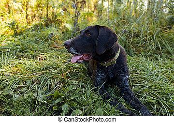 Portrait of black hunter dog sitting in grass