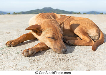 portrait of brown dog sleeping in the ground