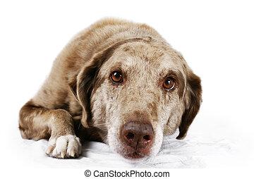 Portrait of brown eyed dog