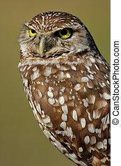 Portrait of Burrowing Owl