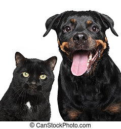 Portrait of cat and dog on white