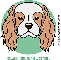 Portrait of Cavalier King Charles Spaniel. Vector...