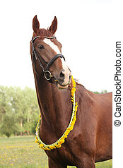 Portrait of chestnut horse with dandelion circlet at the...