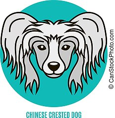 Portrait of Chinese Crested Dog. Vector illustration in style of flat