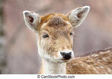 portrait of curious deer doe