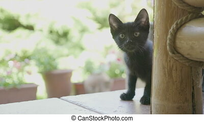 Portrait of curious funny black baby cat staring outside in...