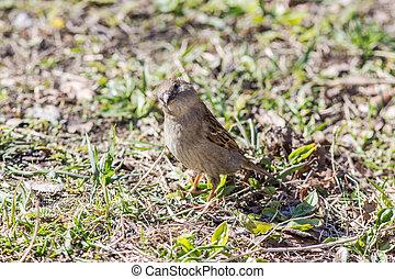 portrait of curious sparrow