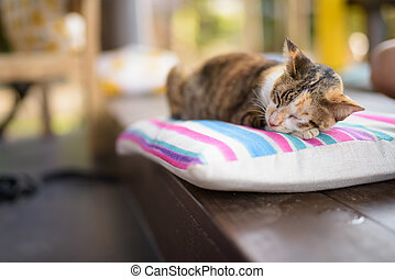 Cute Calico Cat Sleeping On The Cushion