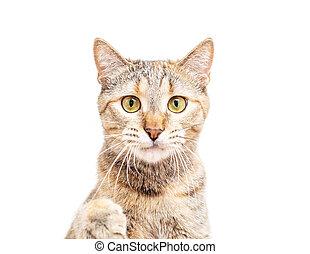 Portrait of cute cat, staring at camera.