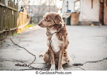 Portrait of cute chained brown or red dog sitting on old ...