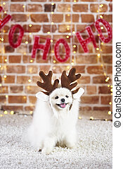 Portrait of cute dog with reindeer's antlers