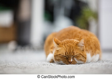 Portrait of cute sleeping red home cat.