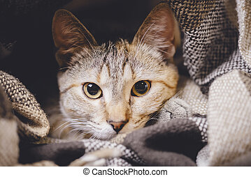 Portrait of cute tabby cat with big eyes.