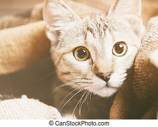 Portrait of cute tabby kitten.