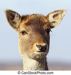 portrait of deer calf