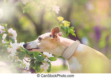 Portrait of dog in spring blossom