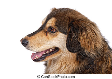 Portrait of dog on a white background