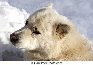 Portrait of dog resting on snow