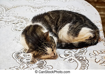 Portrait of domestic cat sleeping on tablecloth