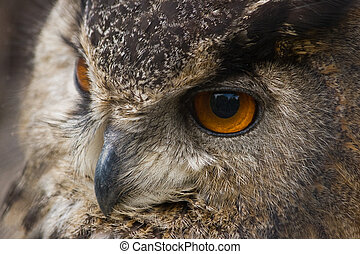 Eagle owl in close view