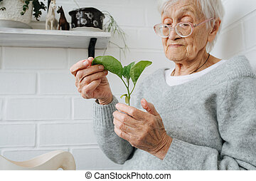 Portrait of elderely grey haired woman examining young plant at home