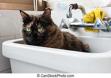 Portrait of european cat. Calico cat or tortoiseshell cat.