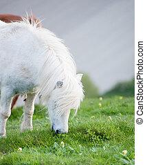 Portrait of farm horse animal in rural farming landscape