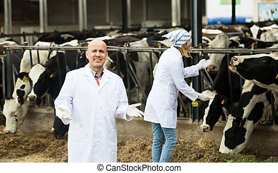 Portrait of farm workers in cowhouse - Professional vets ...